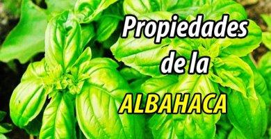 PROPIEDADES ALBAHACA