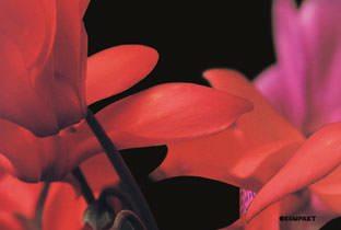 Pop Ambient 2010 cover album