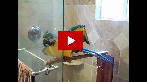 papagal la dus