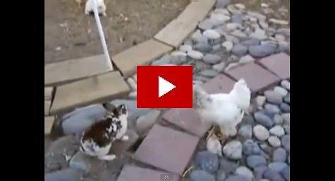 doi iepuri batausi