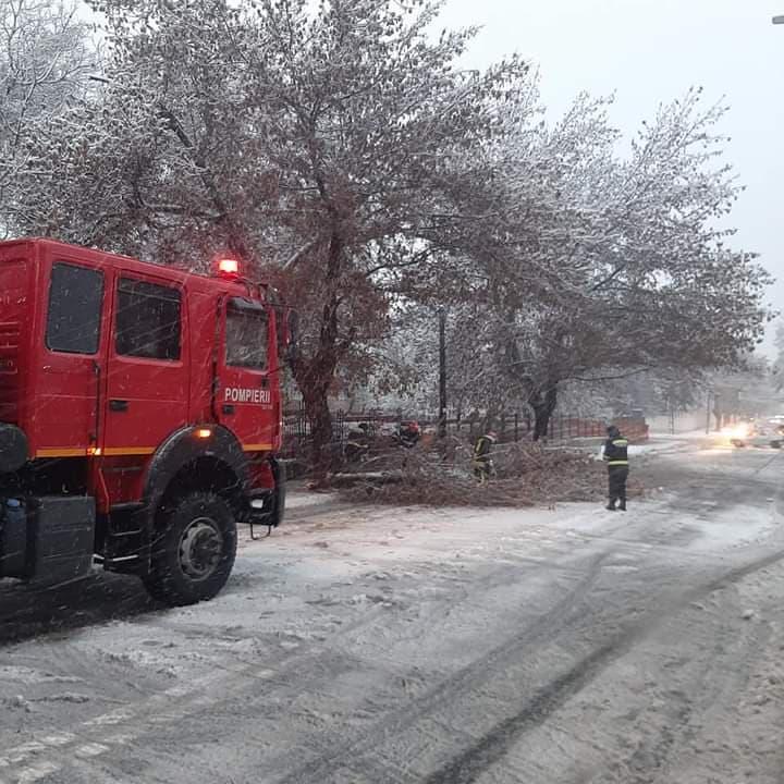 Creanga cazuta pe strada Babadag.