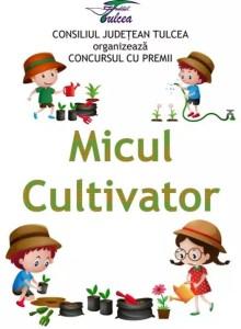 Un nou concurs online pentru copiii tulceni