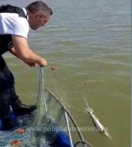 8 exemplare de păstrugă au fost eliberate de poliţiştii de frontieră tulceni