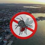 O nouă etapă de dezinsecție în municipiu!