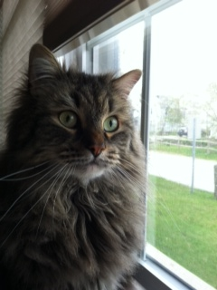 Max monitors our street, ready to alert us if any other cat enters the vicinity.