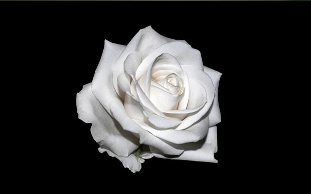 Brit Awards 2018: Promis tragen weiße Rose