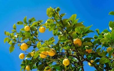 Citrus secrets