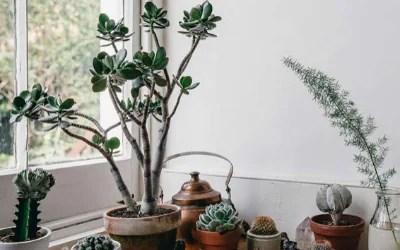 9 Secrets to Growing Succulents Indoors