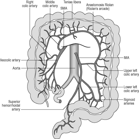 Applied Anatomy And Physiology Of The Gastrointestinal