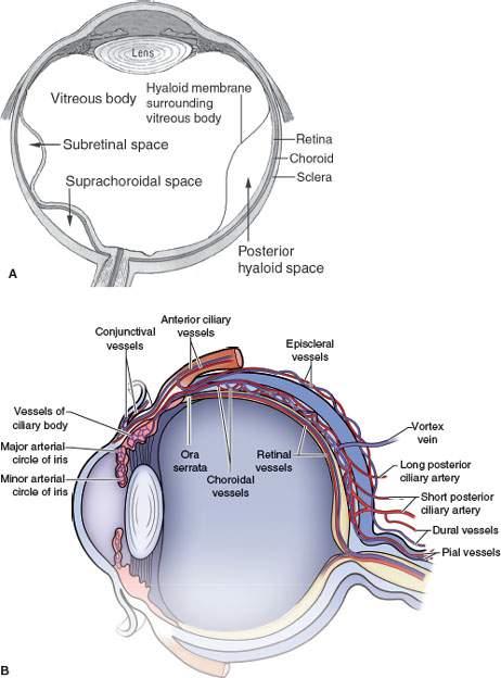 Eye: Retinal, Choroidal, and Hyaloid Detachments | Radiology Key