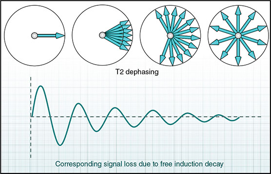 Diagram shows four circles labeled T2 dephrasing on top and graph shows corresponding signal loss due to free induction decay where line increases and decreases and reduces slowly.
