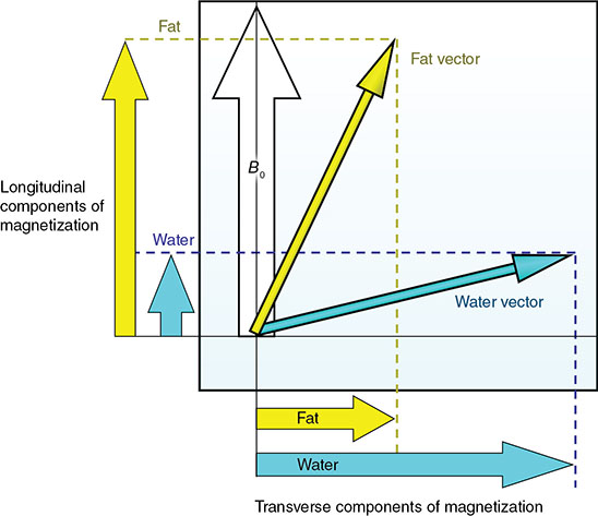 Graph shows transverse components of magnetization versus longitudinal components of magnetization where arrow points upward and two arrows point diagonally labeled Bo, fat vector, and water vector.
