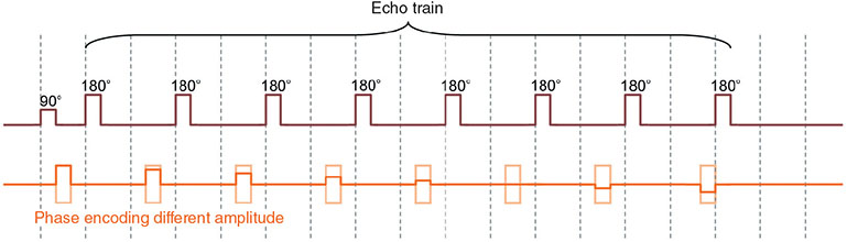 Diagram shows echo train where set of blocks are placed along horizontal line labeled phase encoding different amplitude.