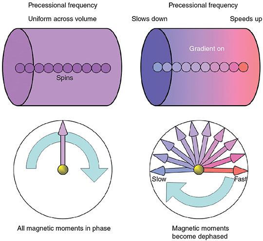 Diagrams show two cylinders labeled precessional frequency with spins on left and gradient on right. Two meters show all magnetic moments in phase and magnetic moments become dephased.