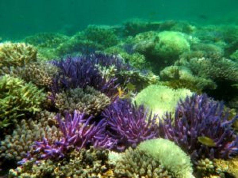 Belice ignora medidas para proteger barrera de coral amenazada, dice WWF - c0f6b48f46029c44a3b8ed9bf38cd1912107971c-300x225