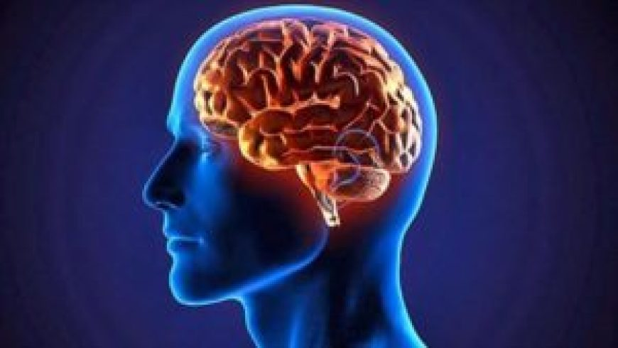 Descubren que el cerebro humano puede operar en 11 dimensiones - 09385305_xl-300x169