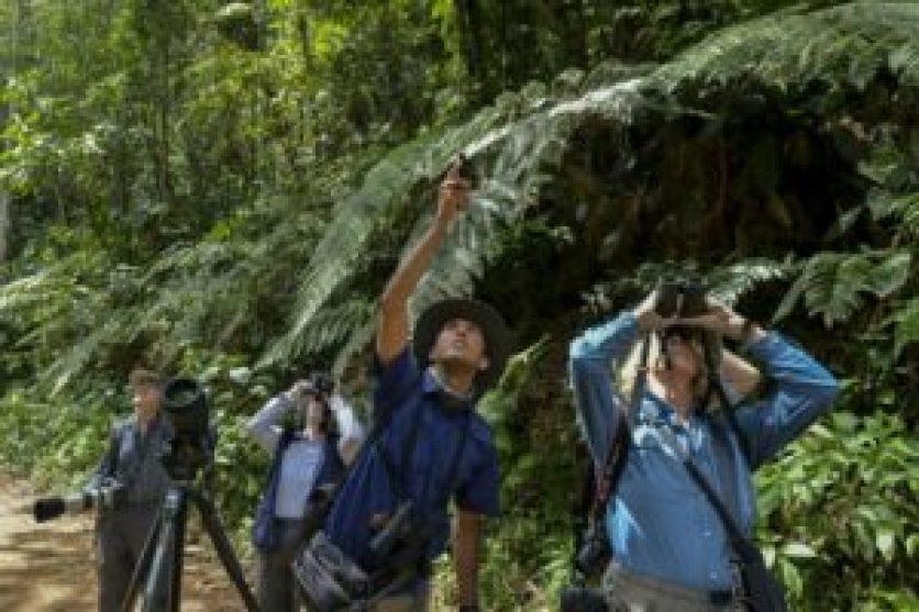 Deforestación en Colombia aumentó 44% en 2016 (informe) - 187a98d7a67c034ac6e8bc93d4203bf208c31ef3-300x200