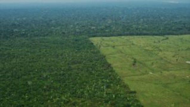 'Deforestación está haciendo surgir enfermedades ya erradicadas' - 18214511_xl-300x169