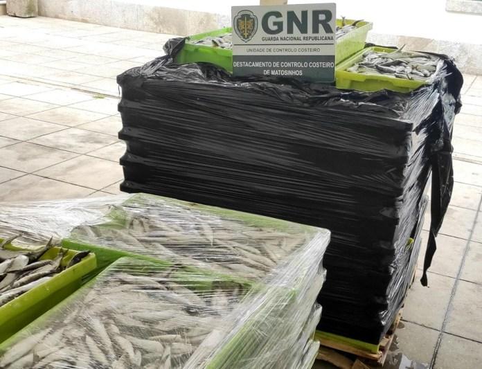 Uma tonelada de sardinha apreendida em Matosinhos