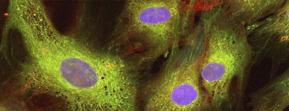Un mundo feliz: regeneración celular para nuevas opciones terapéuticas en animales