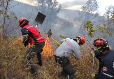 Incendio forestal en el Waraira Repano  consume 12 hectáreas de vegetación.
