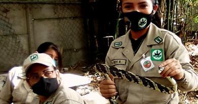 Taller sobre serpientes autóctonas de Venezuela. (+ Identificación y manejo)