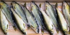 Le 1er avril, les poissons ne sont pas que chez le poissonnier