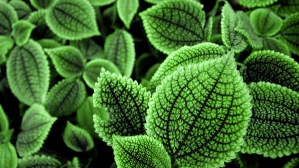 belle_foglie_verdi