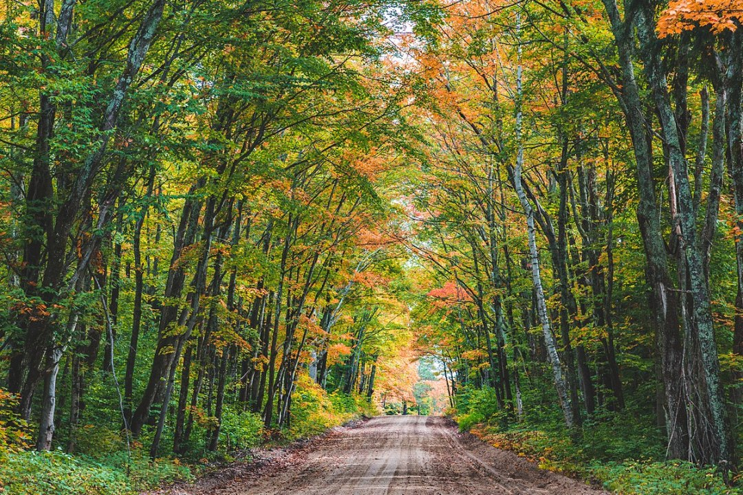 Image of a dirt road through Hiawatha National Forest, Michigan, by Tony Webster.