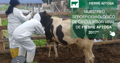 Muestreo seroepidemiológico de circulación viral de Fiebre Aftosa 2017