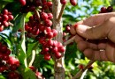 Ministro de Agricultura Rubén Flores señaló que se fijaron precios base y techo para el arroz, maíz y plátano de los productores ecuatorianos