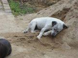 Cachorros desaparecidos 002