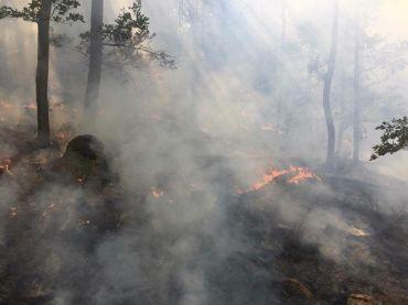 incendiu svinita (4)
