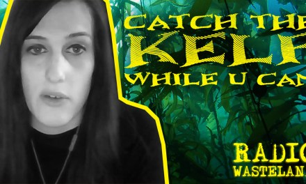 Catch the Kelp Forests While you Can!