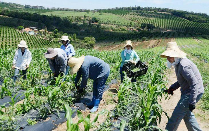 Agriculturos familiares no campo