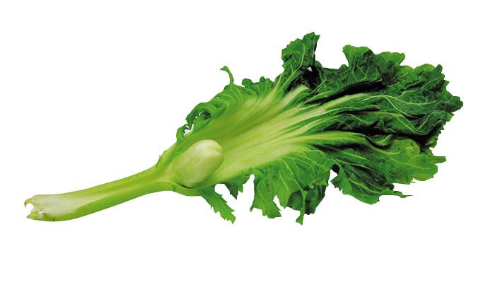 「雲仙こぶ高菜」の画像検索結果
