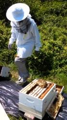 Bee hive installation by Zachari