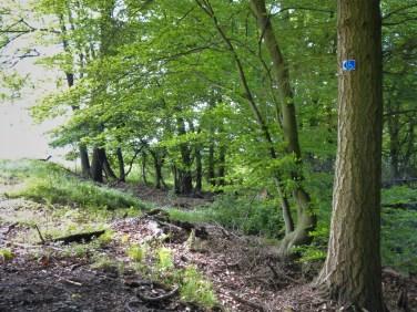 Behindertengerechter Wald