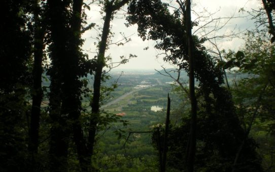 Dalla boscaglia