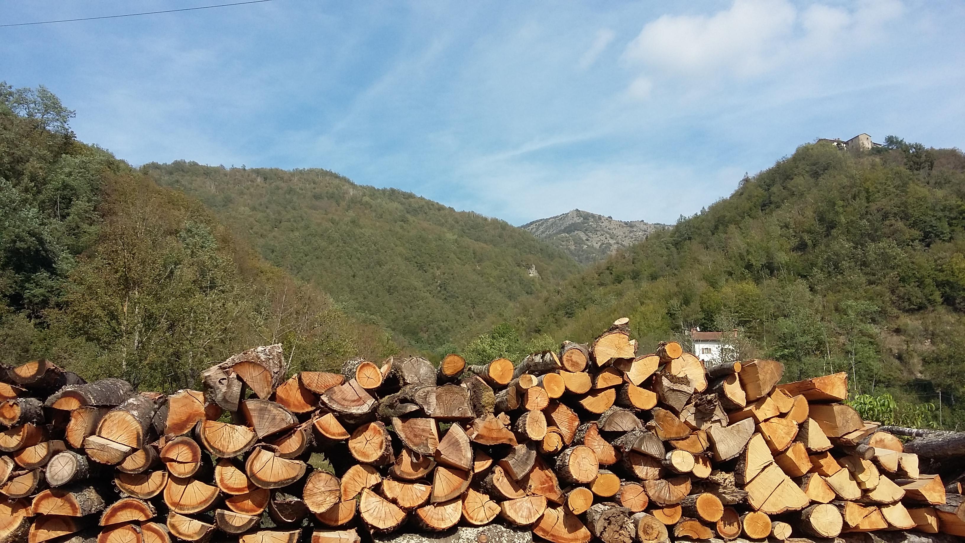 filiera legno sostenibile