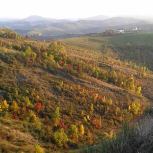Paesaggio-boschi- autunno