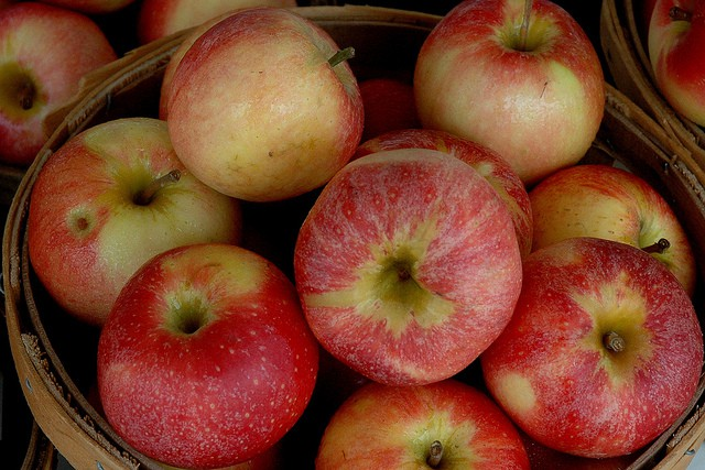 Head to Harriton House for an Apple Festival on October 15th