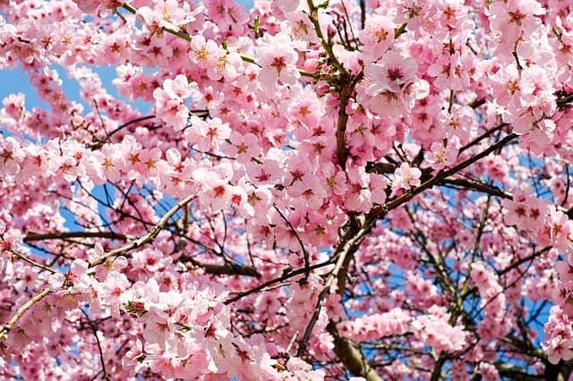 The Subaru Cherry Blossom Festival of Greater Philadelphia Returns April 7
