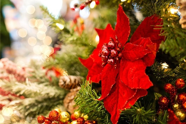Can't-Miss Holiday Events Near Bryn Mawr