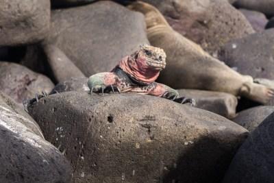 archipielago islas Galápagos, Ecuador 17