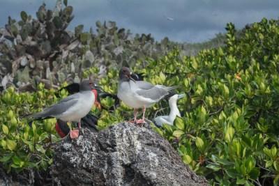 archipielago islas Galápagos, Ecuador -4