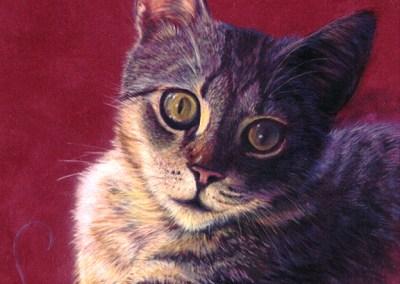 Cat Monet