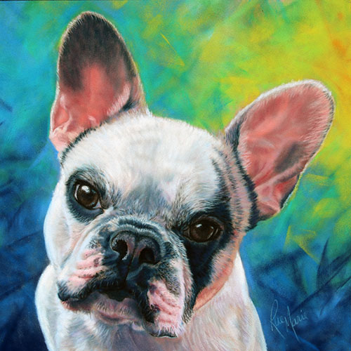 pastel-pet-portrait-by-rae-marie-frenchie-butters-dog