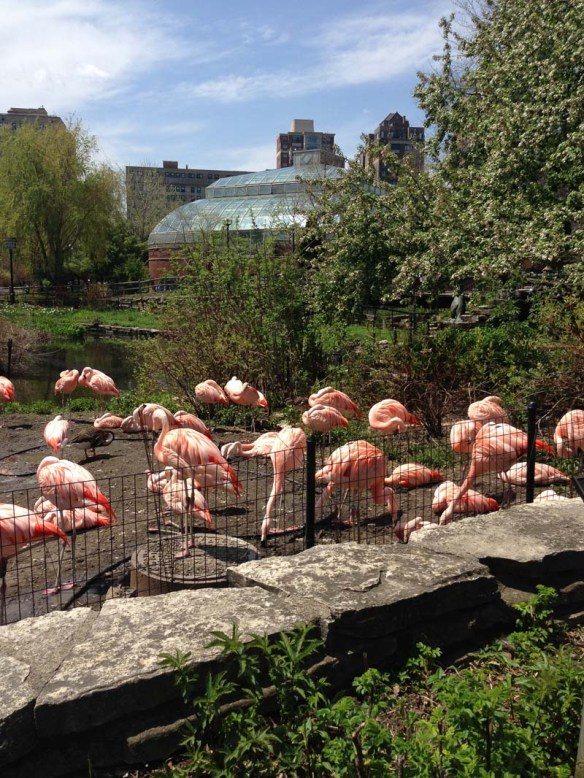 a group of flamingoes