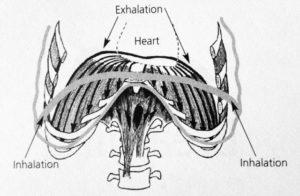 Fig 2 Diaphragm